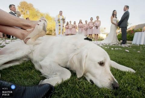 Fotografo di matrimoni Laura Segall dell'Arizona, Stati Uniti