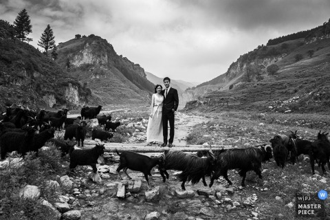 Shanxi bride and groom pose with some goats outside - China wedding photography
