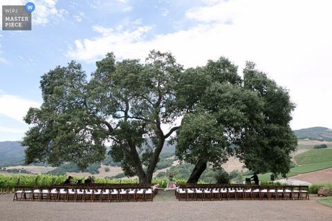 Il fotografo di matrimoni di San Francisco capisce la scena all'aperto con sedie e grandi alberi prima della cerimonia