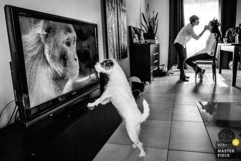 De hond van Montpellier let op de tv terwijl de bruid haar make-up voor de bruiloft afhandelt | Herault huwelijksfotografie