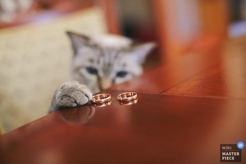 Saint Petersburg cat tries to grab the wedding rings | Russia wedding photo