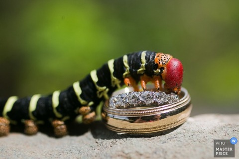 San Francisco wedding photography detail of caterpillar climbing over wedding rings
