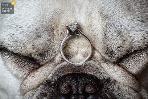 Seattle wedding photography ring detail on the face of a dog
