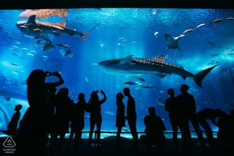 Haai aquarium silhouet paar portret door Zhejiang Engagement Fotograaf