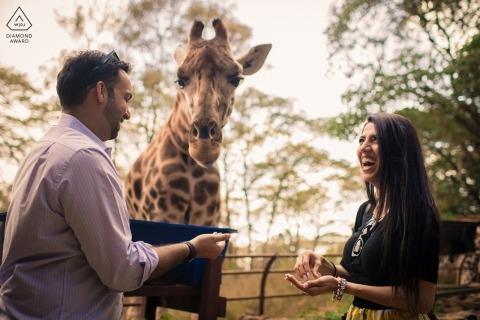 Maharashtra verlovingsportret sessie met een giraf en een paar lachen