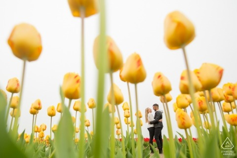 Zuid Holland Engagement Photographer | Netherlands portraits in a field of tulip flowers