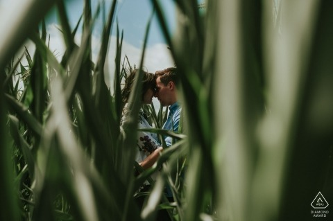 wedding photographer engagement portrait of a couple in maize field | Devon pre-wedding pictures