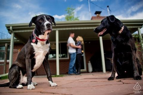 Arvada, CO photographie de fiançailles avec des chiens