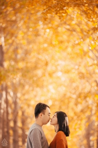 beijing yellow trees | Engagement Photography for china