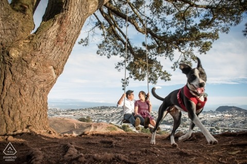 Uitzicht op de stad van deze boom schommel - California Engagement Photo with Dog