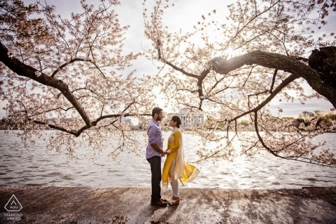 Cherry Blossom Engagement Portraits - Photographies d'engagement du Maryland