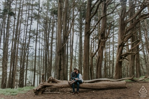 A San Francisco engaged couple sits dead center for a portrait on a dead log in the Forest