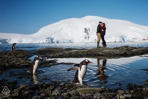 Die Antarktis-Verlobungsporträts - Paar, das mit den Pinguinen aufwirft