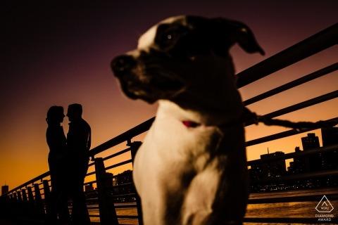 Gantry Plaza Park - Un couple de New York et leur chien la nuit pendant la séance de fiançailles