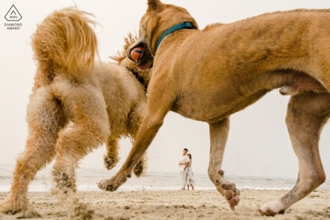 Engagement Photography of couple on the beach with dogs playing in the foreground.