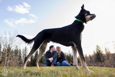 De hondframes koppelen zitting op heuvel tijdens verlovingszitting in Millcreek, Edmonton, Alberta