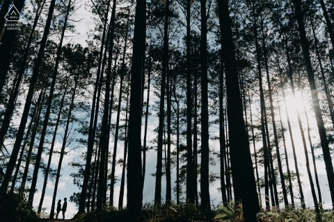 Dalat, Vietnam Forest prewedding pictures with tall trees overhead.