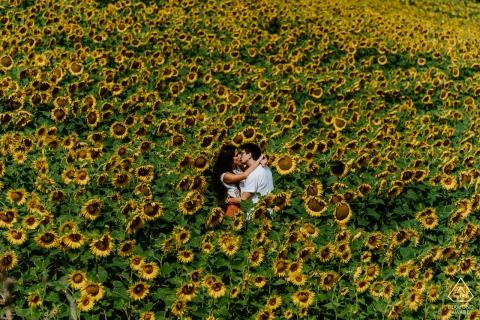 Marche - Italien vor der Hochzeit Fotosession in einem Feld voller Liebe und Sonnenblumen