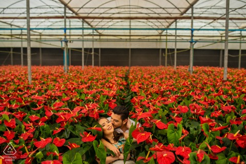 São Paulo couple on the flower field - Engagement pictures in the greenhouse