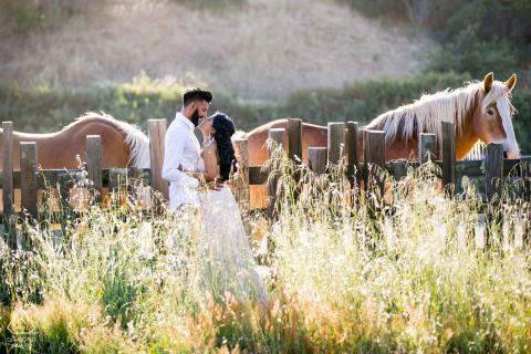 Retrato de pareja comprometida entre pastos altos y caballos en el Rancho Wilder en Santa Cruz