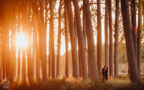 Damme, Belgium Engagement shoot with a golden hour sun and tall forest trees