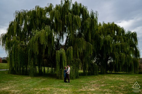 DC engagement portrait with a posed couple in Washington embracing in front of a willow tree