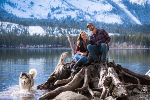 Fallen Leaf Lake, California couple perches on a stump while their Husky wanders around the frozen lake waters during a creative pre-wed portrait shooting session