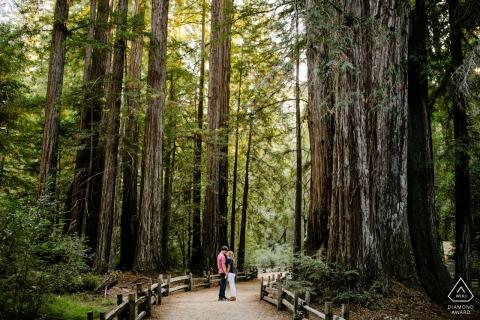 Big Basin, California forest pre wedding shoot