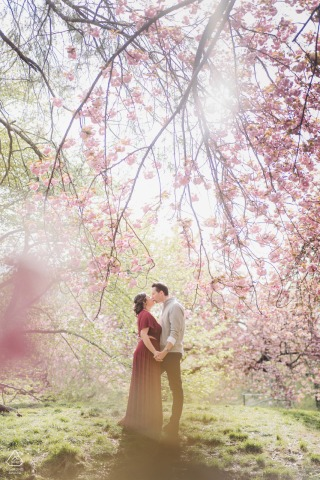 Central Park, NYC Pre Wedding Photoshoot with a Kiss under cherry blossom tree