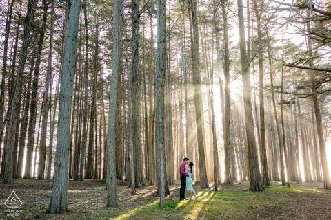 True Love Engagement Picture Session in Moss Beach, CA zeigt ein Paar unter hohen Bäumen im Nebel im Wald