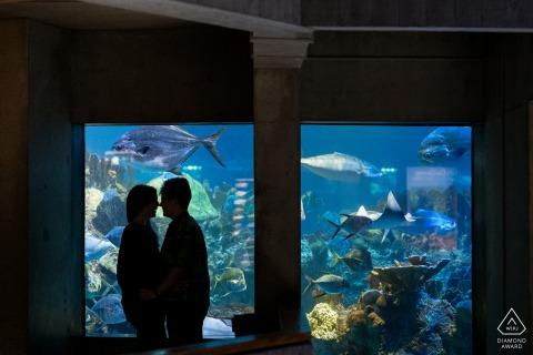 Boston Aquarium couple e-session as a silhouette against the windows of a large fish tank