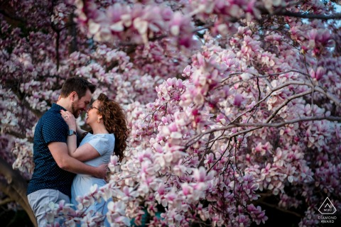 DC bride and groom to be, modeling for a pre-wedding picture at the Enid A. Haupt Gardens, Smithsonian Castle with an embrace in a sea of magnolia flowers