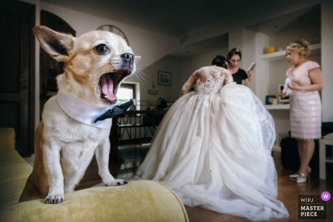Assisi dog yawns as the bride gets her dress ready for the wedding