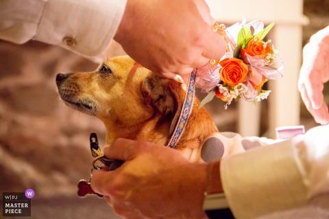 Evergreen, Colorado cane vestirsi per la cerimonia di nozze