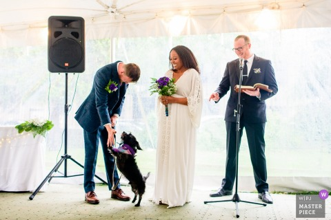Dog plays with the groom at the wedding ceremony at the onderdonk house