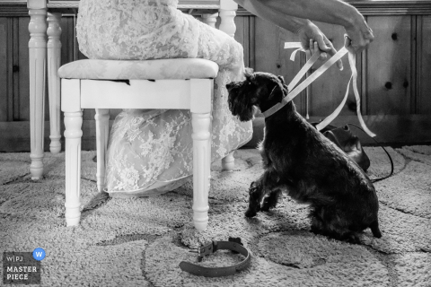 Bride getting her dog ready before the wedding ceremony at South Lake Tahoe, Ca