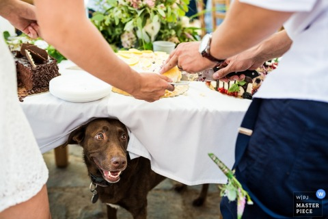 Prague dog underneath the table with food on it at the wedding reception