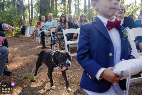 A dog follows the ring bearer down the aisle as guests watch in this photo by a San Jose, CA wedding photographer.