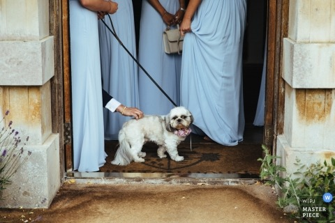Hampshire Wedding Photojournalism | the bridal party dog gets a scratch on the back before the ceremony