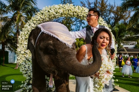 Katathani Phuket Beach Resort wedding photograph of the bride and groom with an elephant.