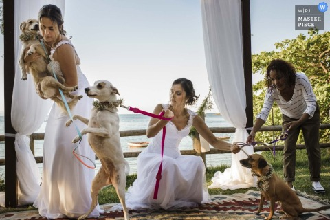 Buzios, Rio de Janeiro, Brazil Wedding Photojournalist | three dogs at the outdoor wedding ceremony
