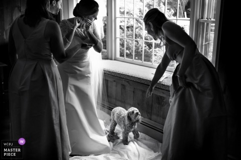 Dog, prep, earings, bridesmaids | Kennebunkport Maine bride getting ready