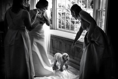 Dog, prep, earings, bridesmaids