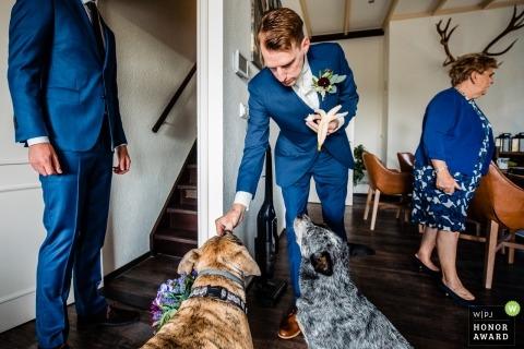 Trouwfotograaf Zuid-Holland准备与两只狗在花园婚礼前