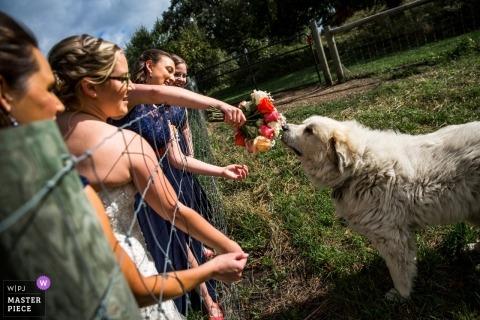 bukiet ślubny Pokazuje szczeniaka ślubnego bukiet