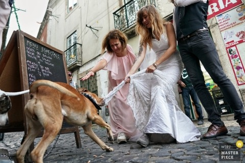 Bronx documentary wedding photo - bride on the streets with a dog