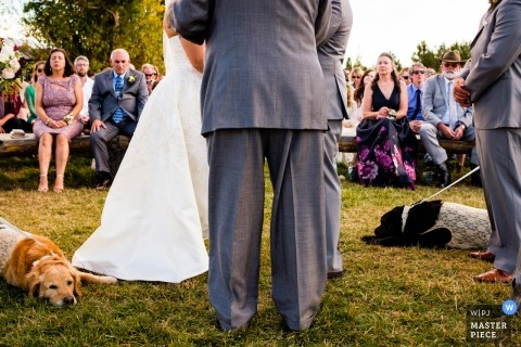 Grand Lake Colorado outdoor wedding ceremony photo with two dogs sleeping at the feet of the bride and groom.