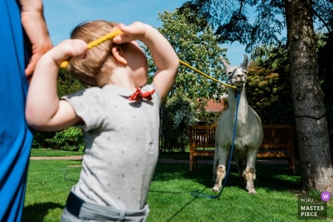 Photo at the Hofgut Dagobertshausen of a boy playing with a llama