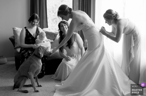 Black and white photo of a bridesmaid helping the bride with her dress as she pets a dog at the Ottawa Hunt Club by a Canada wedding photographer.
