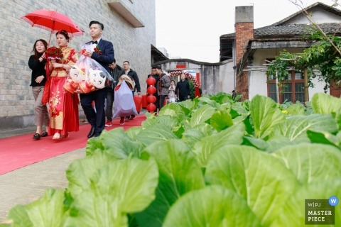 Image of the bride and groom walk through the vegetable field in front of their house in Fuzhou, China